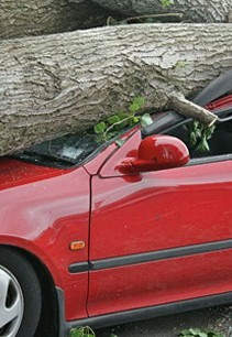 Car with Tree on Top - Background Check